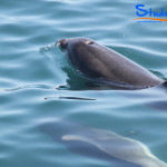 Swimming-with-Dolphins-Student-Trips-New-Zealand-01