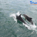 Swimming-with-Dolphins-Student-Trips-New-Zealand-02