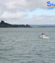 Swimming-with-Dolphins-Student-Trips-New-Zealand-03